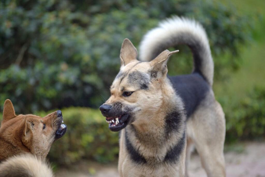 Körperprache Hund