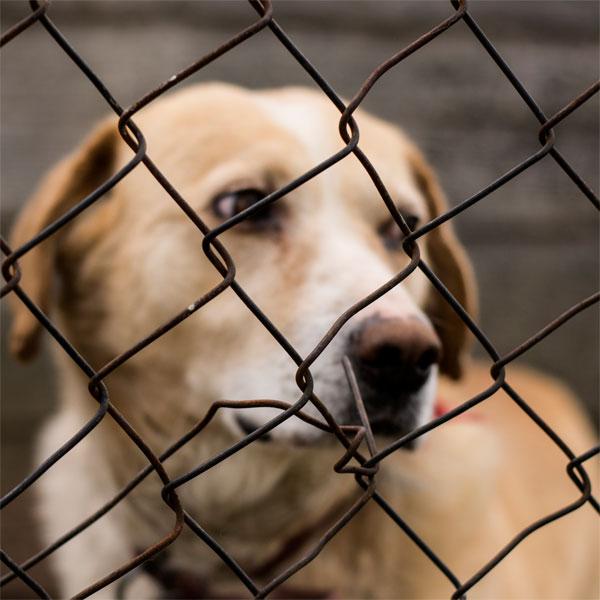 Hunde im Tierschutz