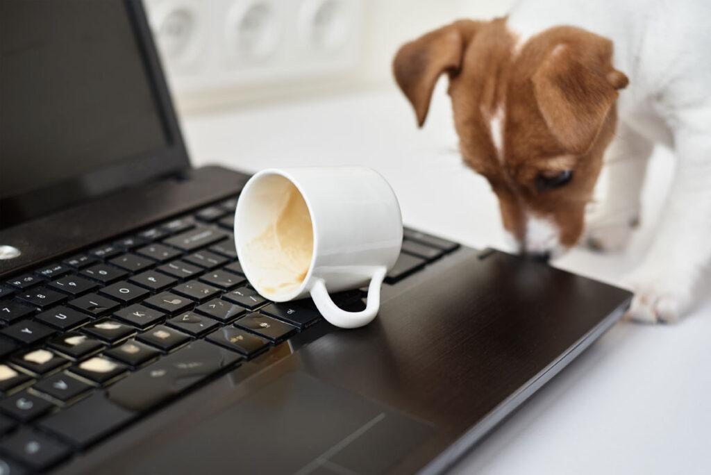 Hundepsychologie und Verhaltenstherapie